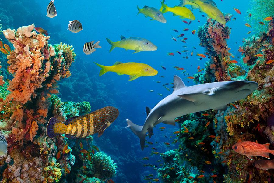 tropical fish in aqaurium